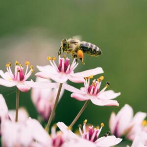 raw organic honey blog